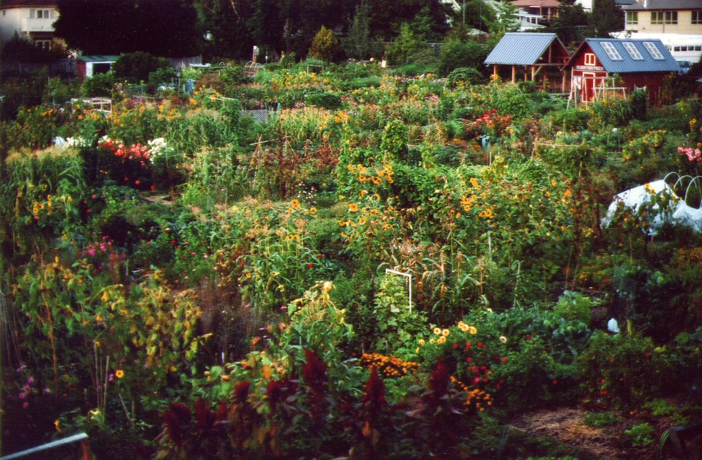 General View of Picardo Farm Garden in September - Photo by Larry Neilson
