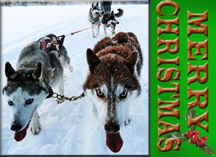 Merry Xmas dogs