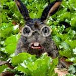 Roger Rabbit icon