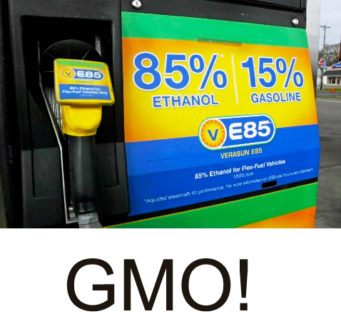 Click image for more on GMO!