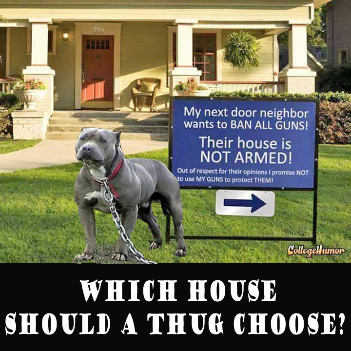 guns and dogs